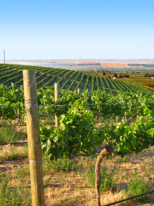 Yakima Valley's agricultural patchwork