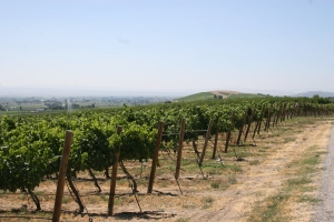Boushey Vineyard
