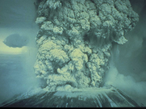 Ash deposits from Mt. St. Helens tops the final layer of soil