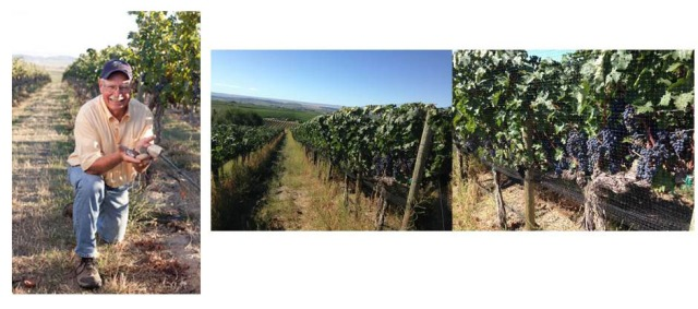 DuBrul Vineyard,