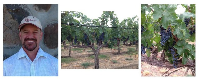 Red Willow Vineyard
