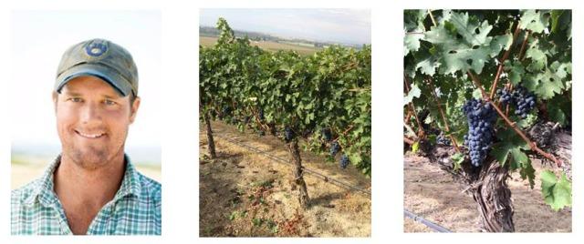 Upland Vineyard